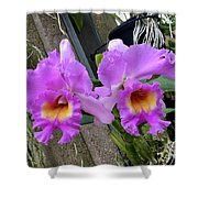 Pretty Purple Orchids Shower Curtain