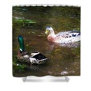 Pair Of Mallard Duck 10 Shower Curtain