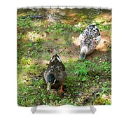 Pair Of Mallard Duck 5 Shower Curtain