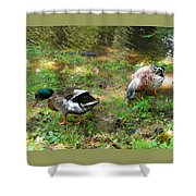 Pair Of Mallard Duck 6 Shower Curtain