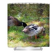 Pair Of Mallard Duck 7 Shower Curtain