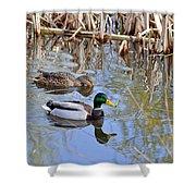 Pair Of Mallard Ducks Shower Curtain
