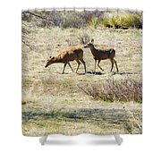 Pair Of Mule Deer Grazing At Chatfield Shower Curtain