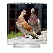 Pair Of Pigeons Shower Curtain
