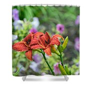 Pair Of Red Asiatic Lilies After A Rain Shower Curtain