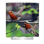 Pair Of Robins Shower Curtain