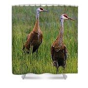 Pair Of Sandhill Cranes Shower Curtain