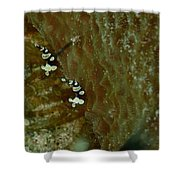 Pair Of Squat Anemone Shrimp Shower Curtain