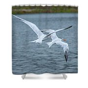Pair Of Terns Shower Curtain