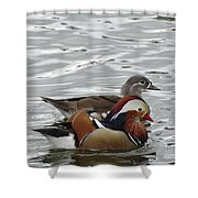 Paired Wood-ducks Shower Curtain