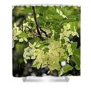Pale And Delicate Shower Curtain