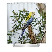 Pale-headed Rosella Shower Curtain