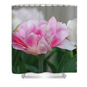 Pale Pink And White Parrot Tulips In A Garden Shower Curtain