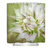 Pale Pink Clematis Shower Curtain