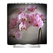 Pale Pink Orchids B W And Pink Shower Curtain