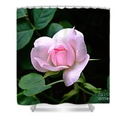 Pale Pink Rose Shower Curtain