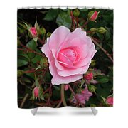 Pale Pink Rose Oregon Coast Shower Curtain