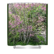 Pale Pink Spring Shower Curtain