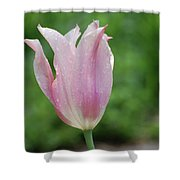 Pale Pink Tulip With Dew Drops Flowering Shower Curtain
