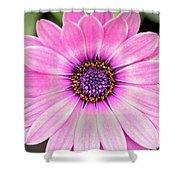 Pale Purple Flower Shower Curtain