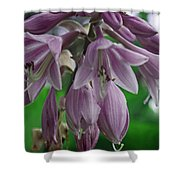 Pale Purple Starbursts Shower Curtain