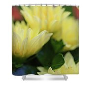 Pale Soft And Yellow Flower Abstract At Sunset Shower Curtain