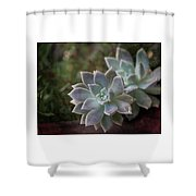Pale Succulent On Artistic Background, Macro Shower Curtain