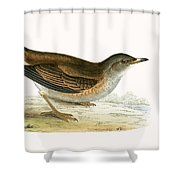 Pale Thrush Shower Curtain