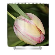 Pale Yellow And Pink Tulip Shower Curtain