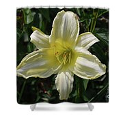 Pale Yellow Flowering Lily Blossom In A Garden Shower Curtain