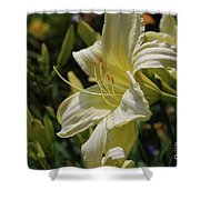 Pale Yellow Lily In A Garden Of Daylilies Shower Curtain