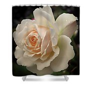 Pale Yellow Rose After The Rain - Glow Shower Curtain