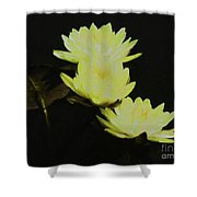 Pale Yellow Water Lilies Shower Curtain