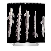 Paleolithic Harpoons Shower Curtain
