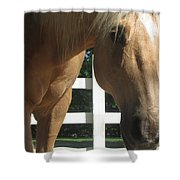 Palimino Pal Shower Curtain