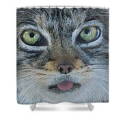 Pallas Cat Shower Curtain