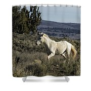 Pallaton Shower Curtain