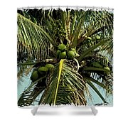 Palm 1 Shower Curtain