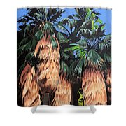 Palm Canyon Entrance Shower Curtain