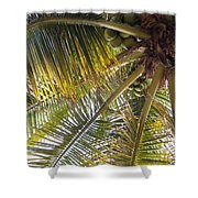 Palm Collection - Coconuts Are Fine Shower Curtain
