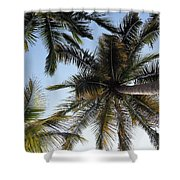 Palm Collection - Standing Tall Shower Curtain