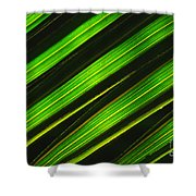 Palm Frond Abstract Shower Curtain