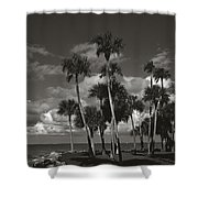 Palm Group In Florida Bw Shower Curtain