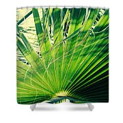 Palm House Branch Shower Curtain