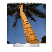 Palm In Blue Sky Shower Curtain