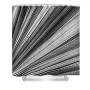 Palm Leaf Texture Shower Curtain