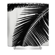 Palm Leaves Bw Shower Curtain