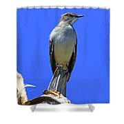 Palm Mocking Bird Shower Curtain by Deborah Benoit
