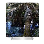 Palm Over A Boil Shower Curtain