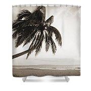 Palm Over Beach Shower Curtain